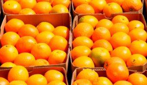 Orange Juicers